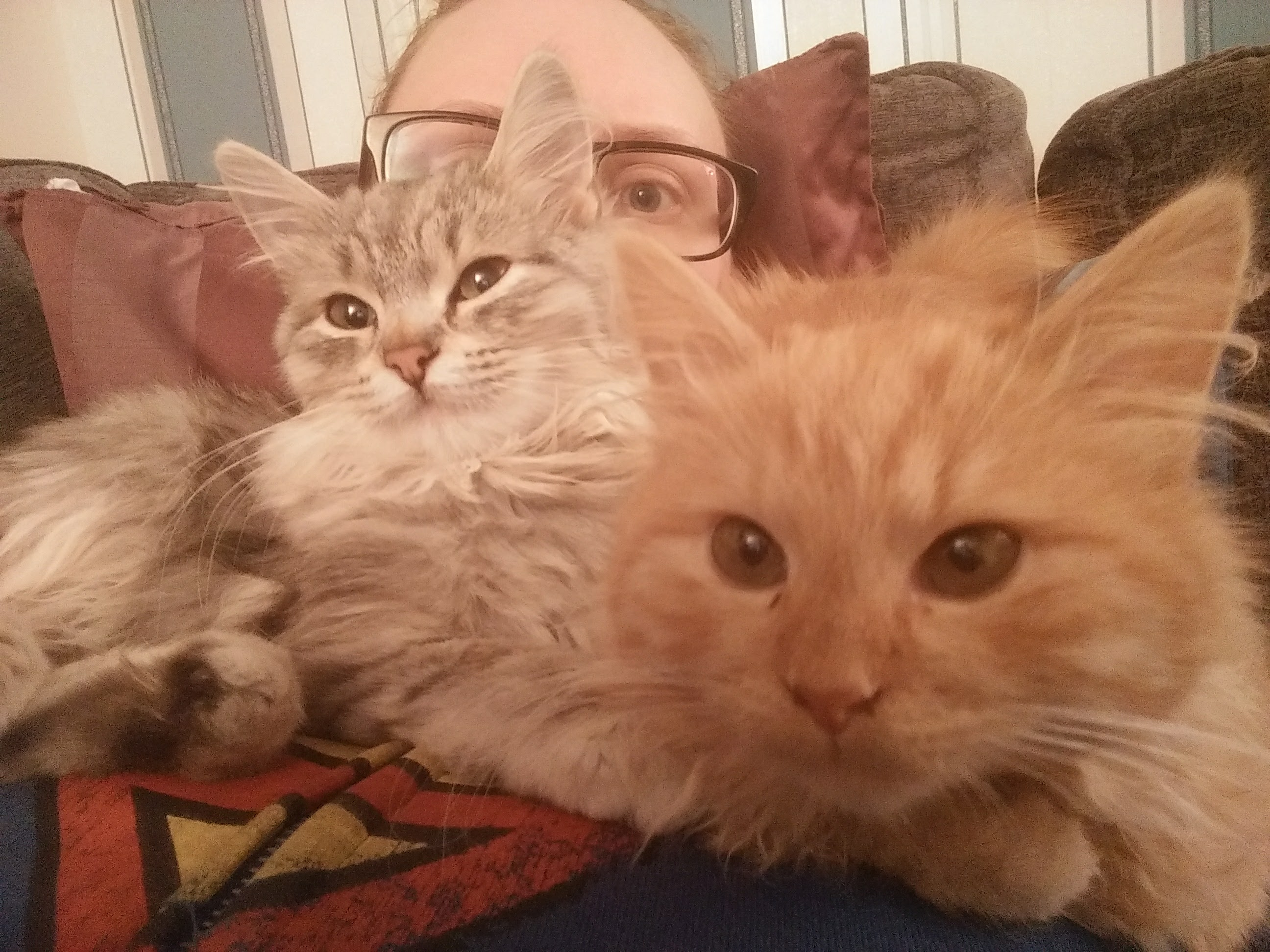 What to expect when owning a Siberian kitten